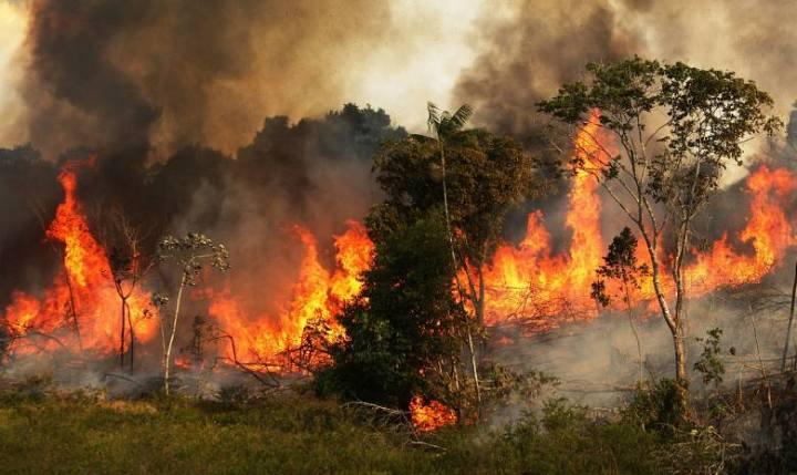 Այրվում են Երկրի «թոքերը»